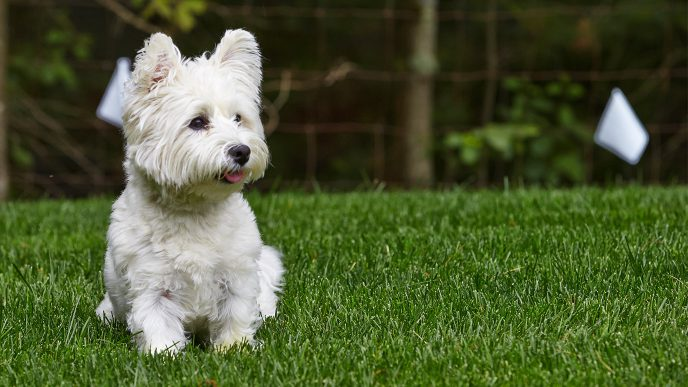 DogWatch® SE | Hidden Dog Fences – It's All About Your Dog